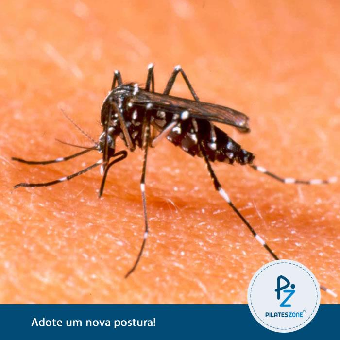 Aedes-aegypti